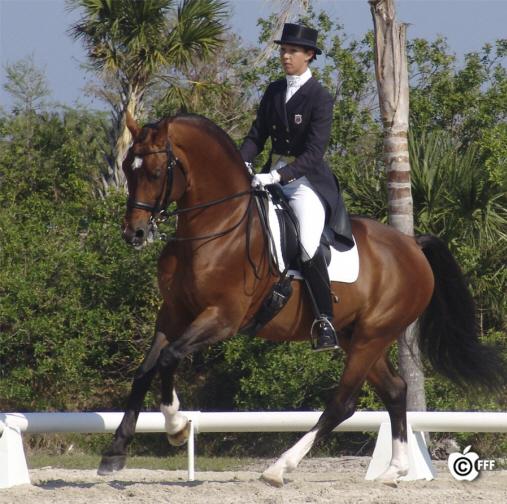 Many horses: CKcanter_2006